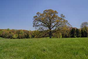 Farm in Louisa County Virginia for sale