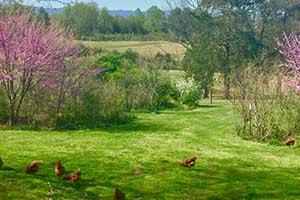 Madison County Va Sustainable Farm and Home for sale