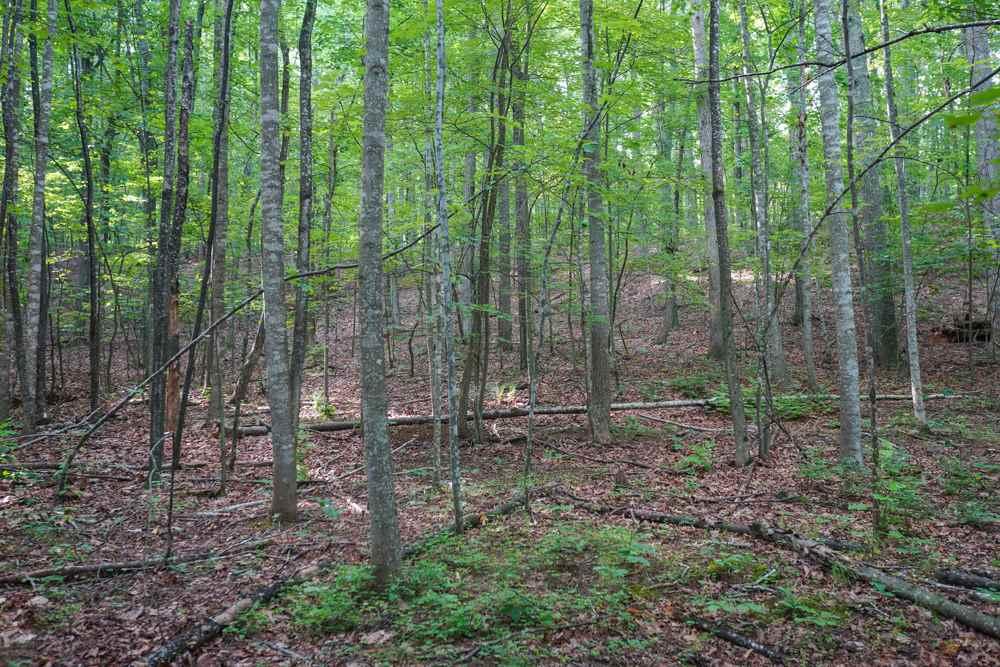 Va Land For Sale near Charlottesville